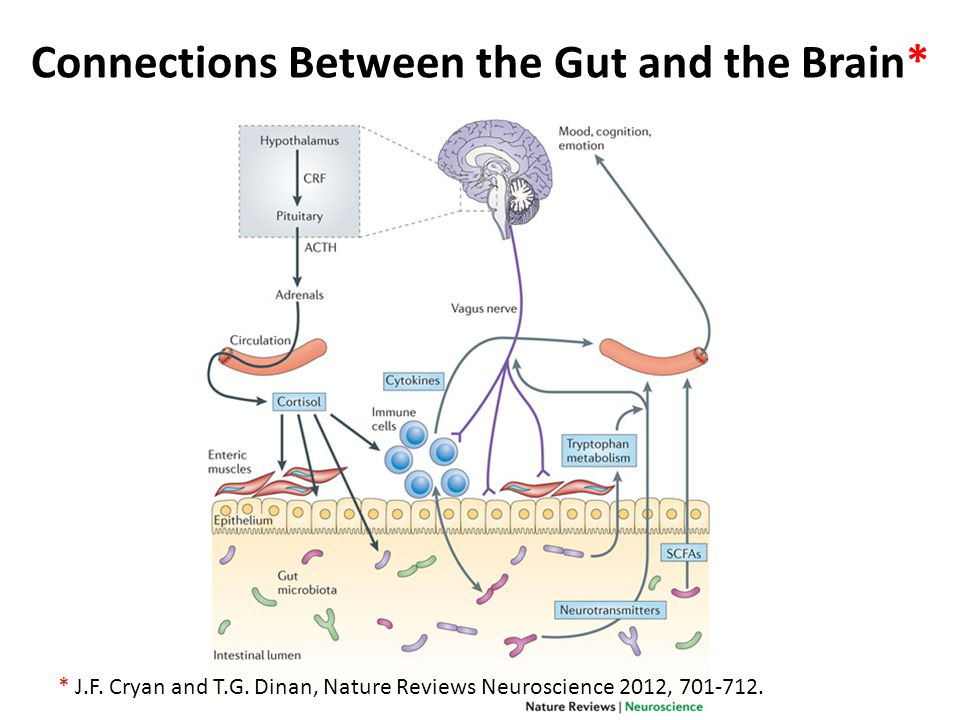 Connections Between the Gut and the Brain* * J.F.Cryan and T.G.