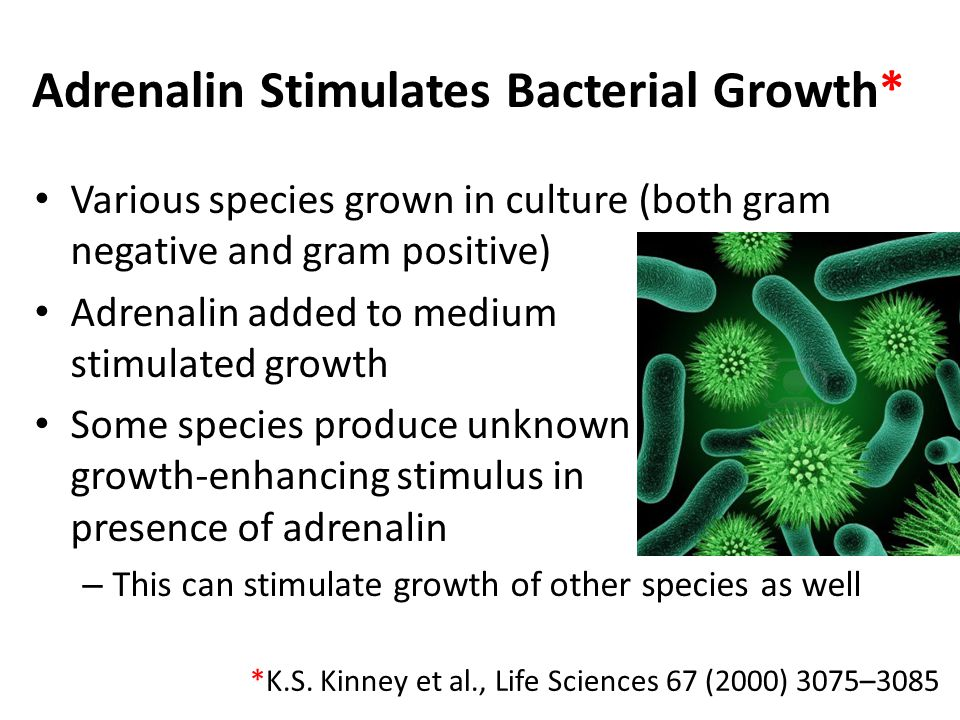Adrenalin Stimulates Bacterial Growth* Various species grown in culture (both gram negative and gram positive) Adrenalin added to medium stimulated growth Some species produce unknown growth-enhancing stimulus in presence of adrenalin – This can stimulate growth of other species as well *K.S.