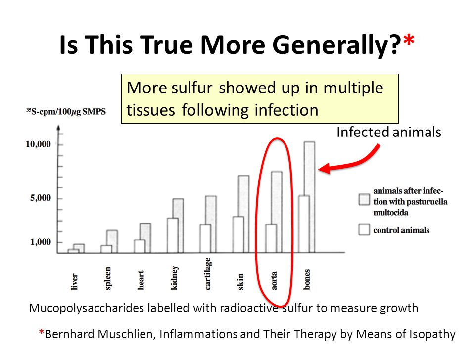 Is This True More Generally?* *Bernhard Muschlien, Inflammations and Their Therapy by Means of Isopathy Mucopolysaccharides labelled with radioactive sulfur to measure growth Infected animals More sulfur showed up in multiple tissues following infection
