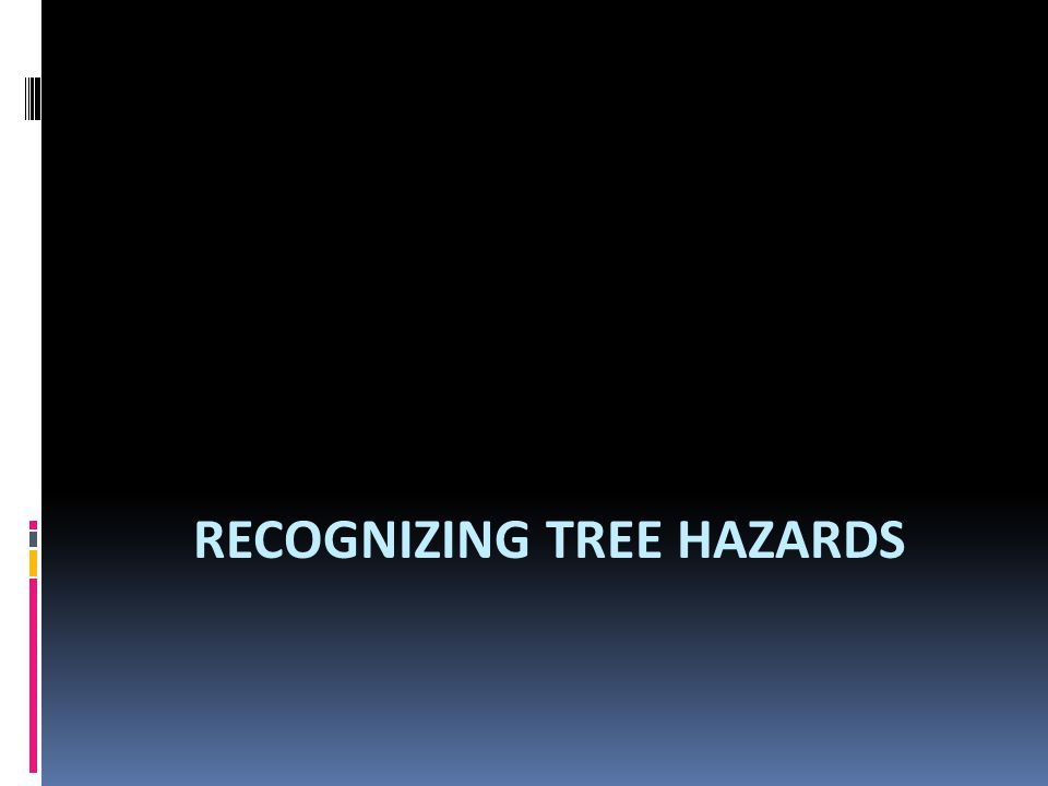 RECOGNIZING TREE HAZARDS