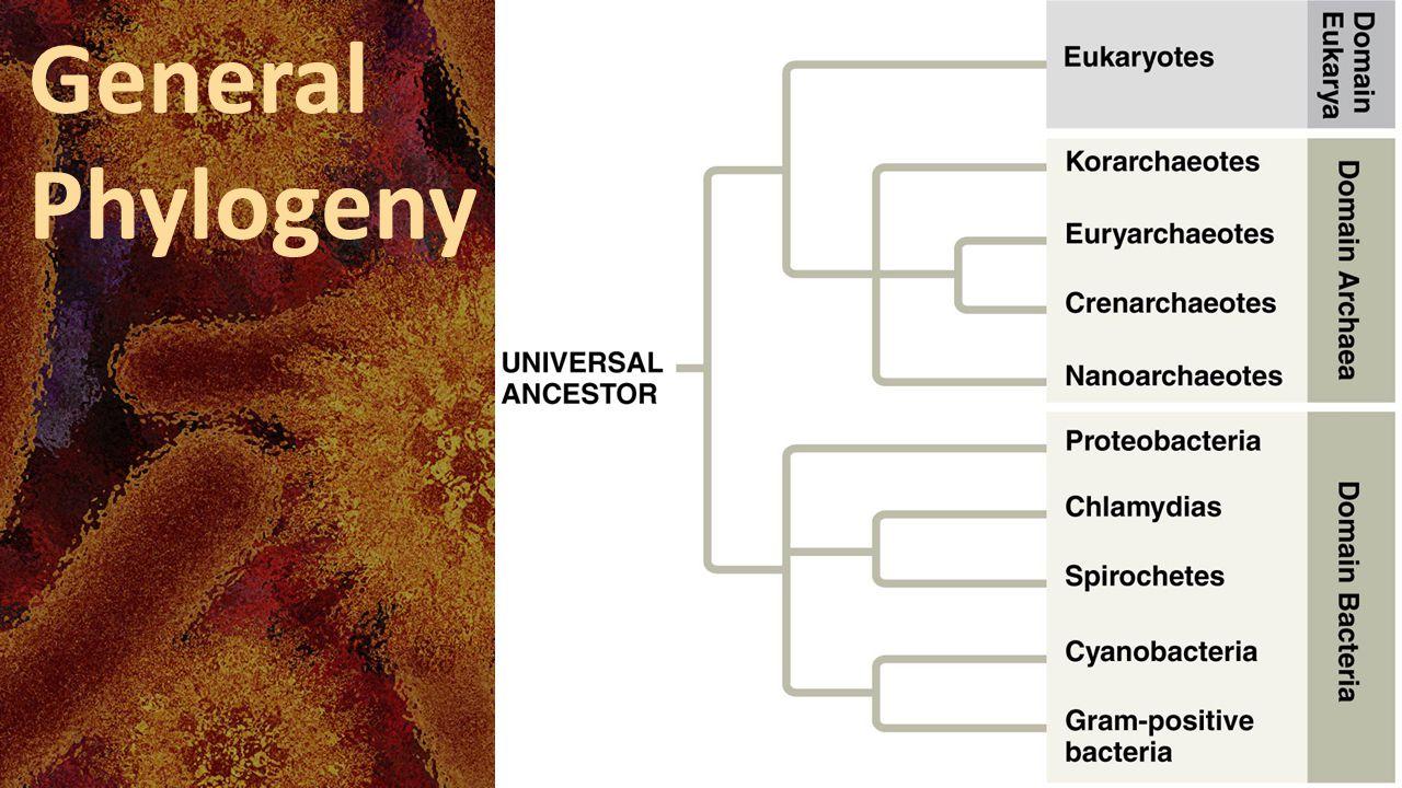 General Phylogeny
