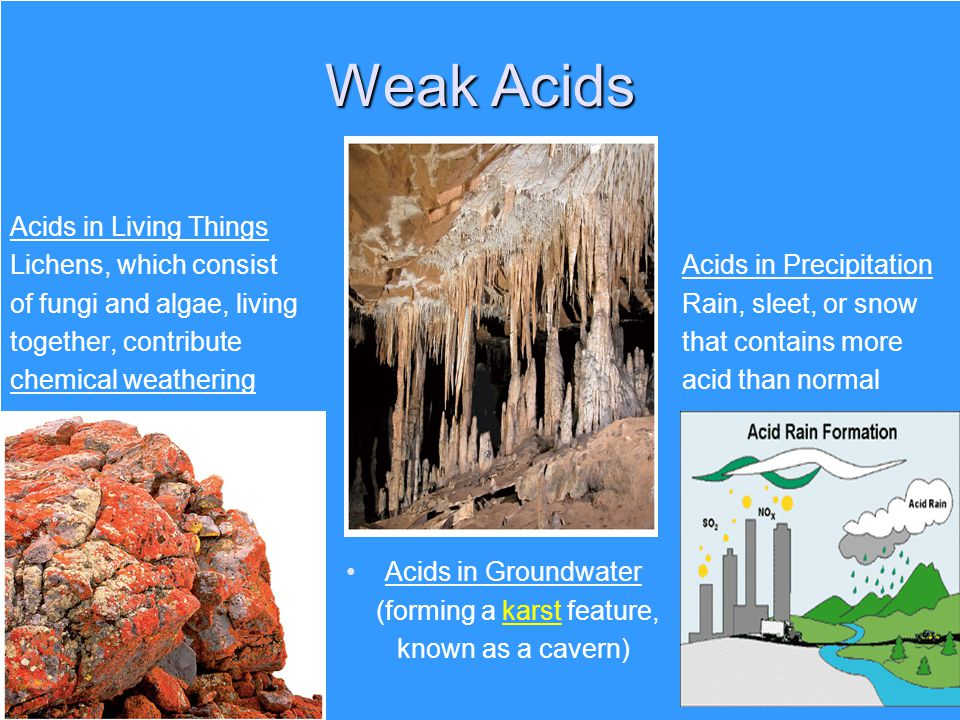 Weak Acids Acids in Living Things Lichens, which consist Acids in Precipitation of fungi and algae, living Rain, sleet, or snow together, contribute t
