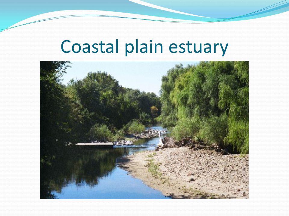 Coastal plain estuary