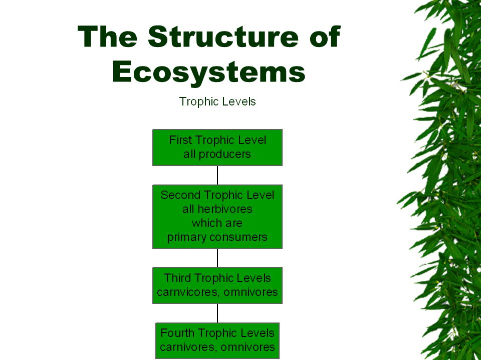 The Structure of Ecosystems