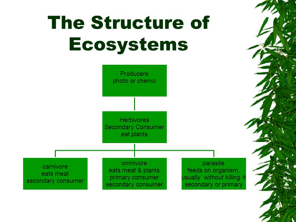 The Structure of Ecosystems Producers photo or chemo Herbivores Secondary Consumer eat plants carnivore eats meat secondary consumer omnivore eats meat & plants primary consumer secondary consumer parasite feeds on organism, usually without killing it secondary or primary