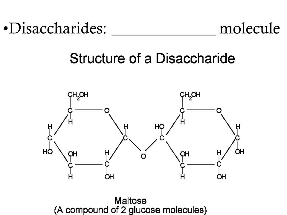 Disaccharides: _____________ molecule