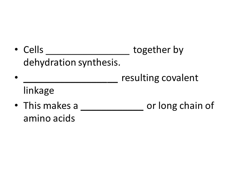 Cells ________________ together by dehydration synthesis. __________________ resulting covalent linkage This makes a ____________ or long chain of ami
