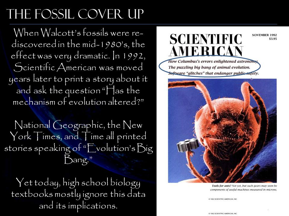 When Walcott's fossils were re- discovered in the mid-1980's, the effect was very dramatic. In 1992, Scientific American was moved years later to prin