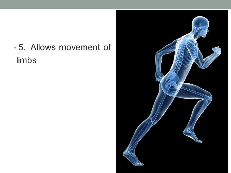 5. Allows movement of limbs