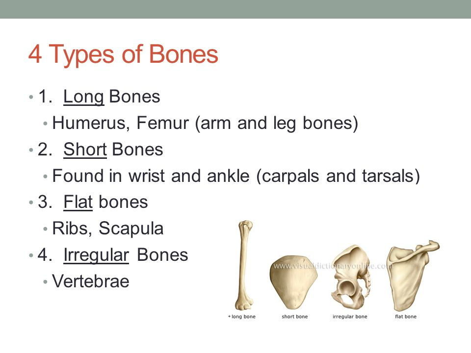 Problems of Skeletal System 1.Fracture – any type of break in the bone 4 types 1a.