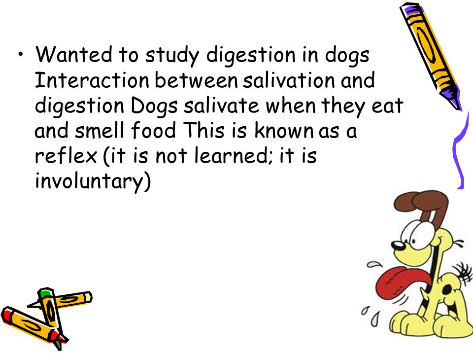Wanted to study digestion in dogs Interaction between salivation and digestion Dogs salivate when they eat and smell food This is known as a reflex (it is not learned; it is involuntary)
