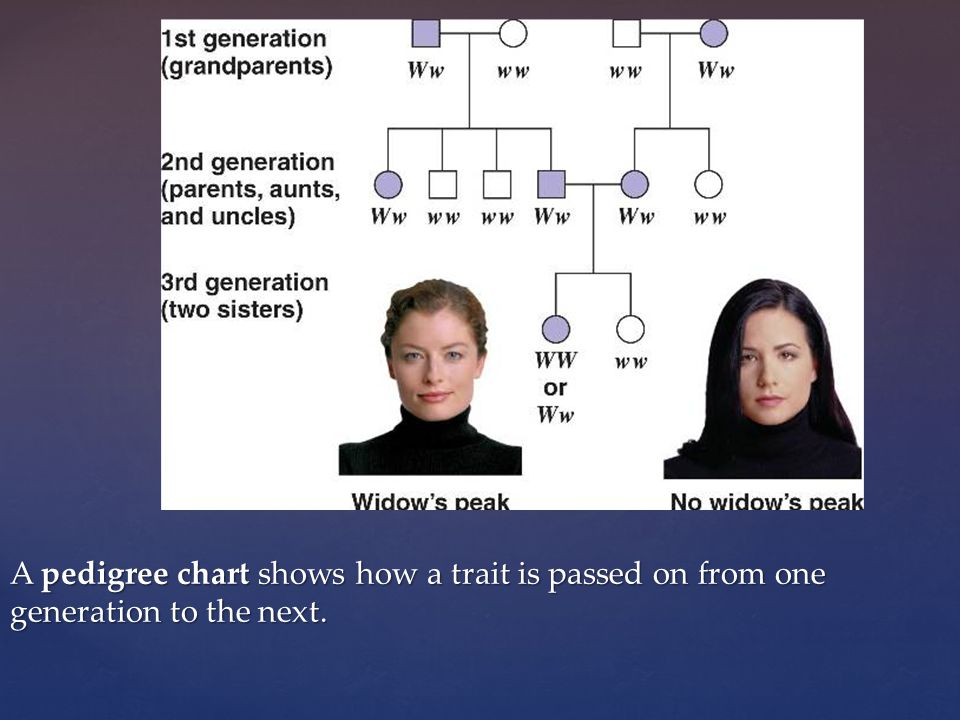 A pedigree chart shows how a trait is passed on from one generation to the next.