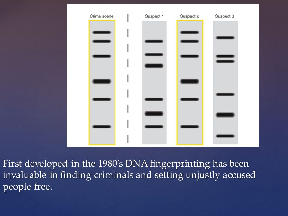 First developed in the 1980's DNA fingerprinting has been invaluable in finding criminals and setting unjustly accused people free.