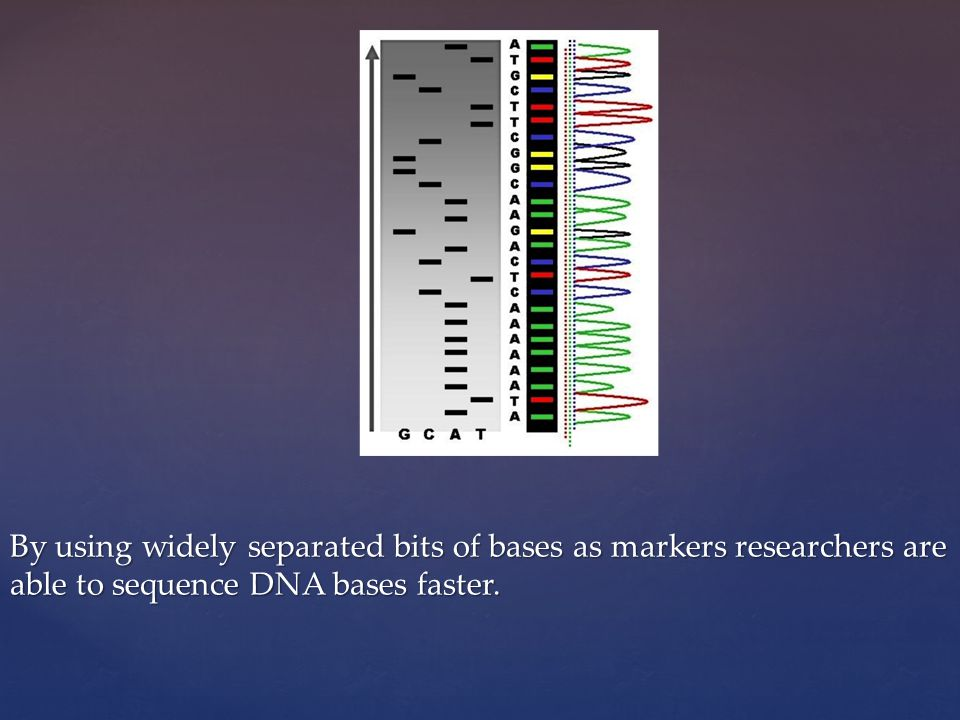 By using widely separated bits of bases as markers researchers are able to sequence DNA bases faster.