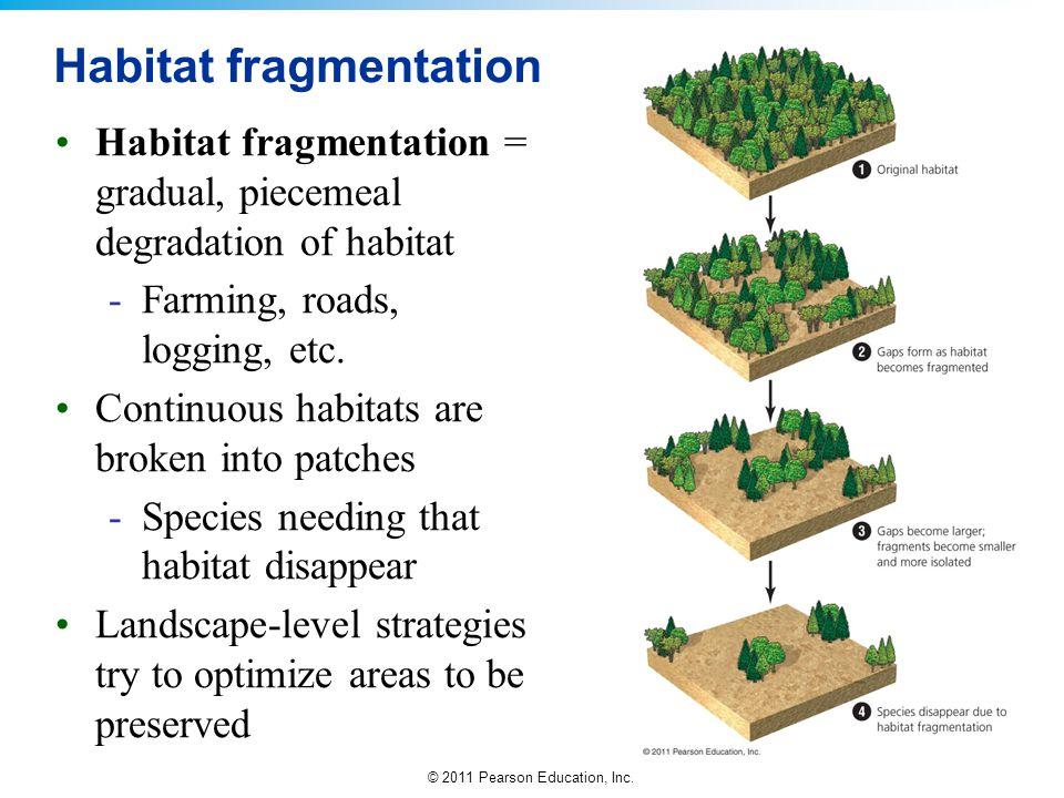 © 2011 Pearson Education, Inc. Habitat fragmentation Habitat fragmentation = gradual, piecemeal degradation of habitat -Farming, roads, logging, etc.