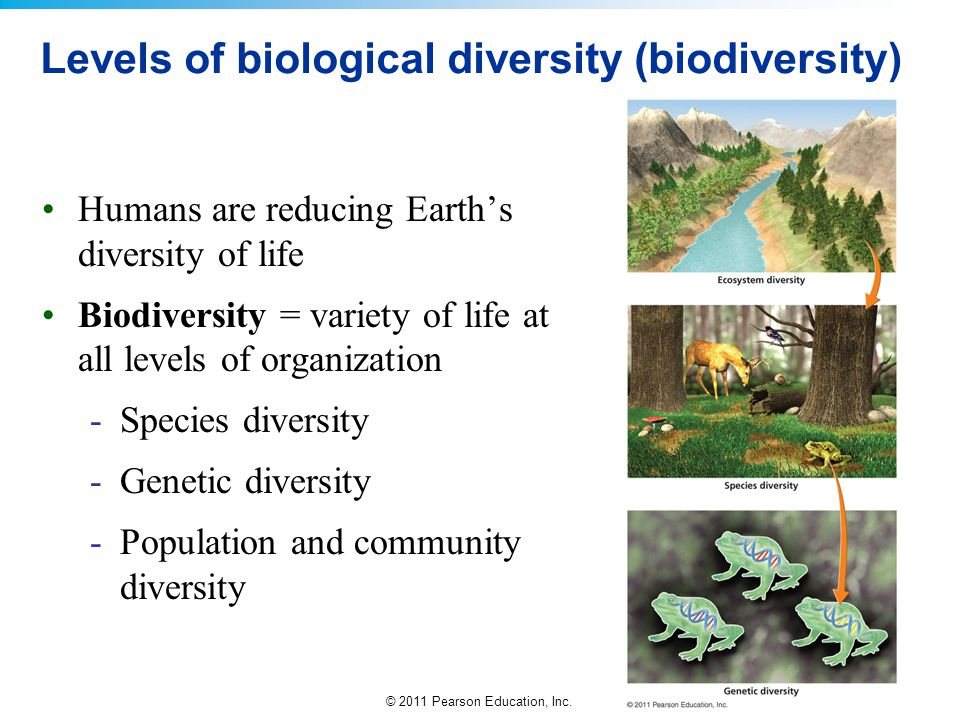 © 2011 Pearson Education, Inc. Levels of biological diversity (biodiversity) Humans are reducing Earth's diversity of life Biodiversity = variety of l