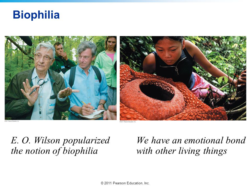 © 2011 Pearson Education, Inc. Biophilia E. O. Wilson popularized the notion of biophilia We have an emotional bond with other living things