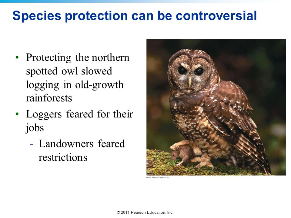 © 2011 Pearson Education, Inc. Species protection can be controversial Protecting the northern spotted owl slowed logging in old-growth rainforests Lo