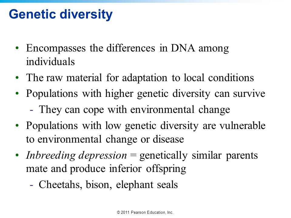© 2011 Pearson Education, Inc. Genetic diversity Encompasses the differences in DNA among individuals The raw material for adaptation to local conditi