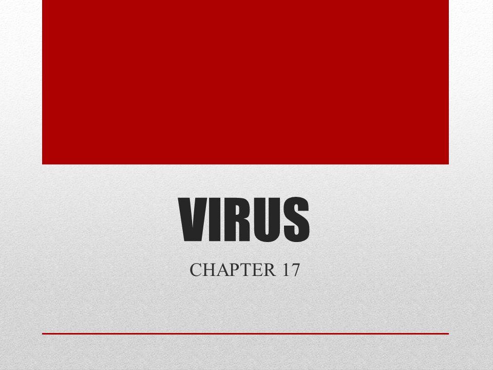 VIRUS CHAPTER 17