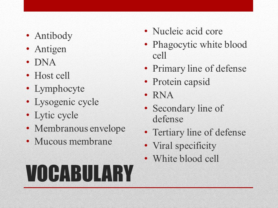 VOCABULARY Antibody Antigen DNA Host cell Lymphocyte Lysogenic cycle Lytic cycle Membranous envelope Mucous membrane Nucleic acid core Phagocytic white blood cell Primary line of defense Protein capsid RNA Secondary line of defense Tertiary line of defense Viral specificity White blood cell