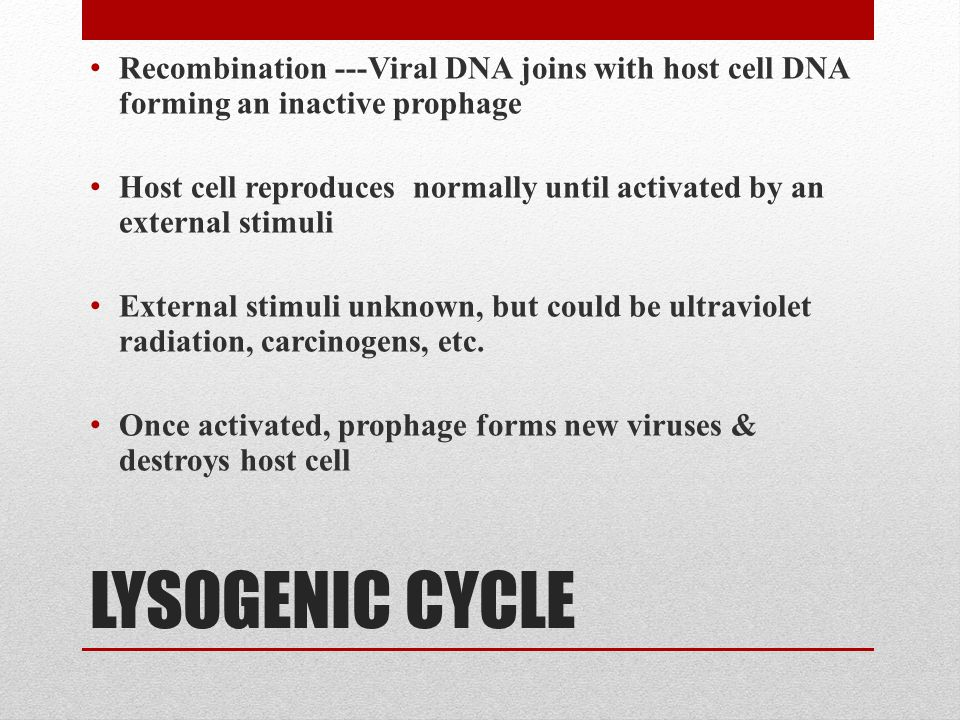 LYSOGENIC CYCLE Recombination ---Viral DNA joins with host cell DNA forming an inactive prophage Host cell reproduces normally until activated by an external stimuli External stimuli unknown, but could be ultraviolet radiation, carcinogens, etc.