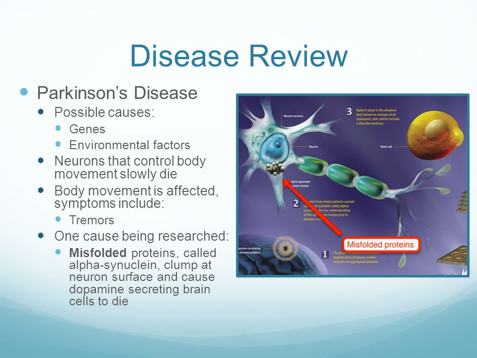 Disease Review Parkinson's Disease Possible causes: Genes Environmental factors Neurons that control body movement slowly die Body movement is affected, symptoms include: Tremors One cause being researched: Misfolded proteins, called alpha-synuclein, clump at neuron surface and cause dopamine secreting brain cells to die