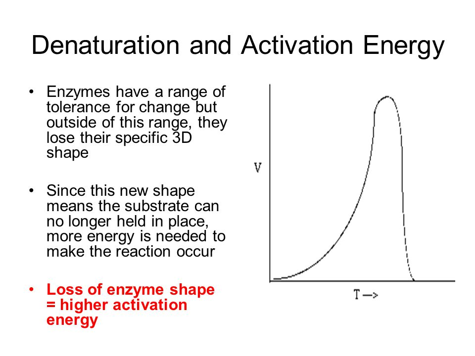 Denaturation and Activation Energy Enzymes have a range of tolerance for change but outside of this range, they lose their specific 3D shape Since this new shape means the substrate can no longer held in place, more energy is needed to make the reaction occur Loss of enzyme shape = higher activation energy