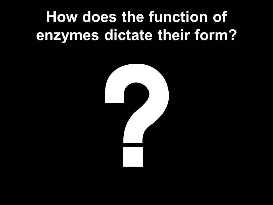 How does the function of enzymes dictate their form