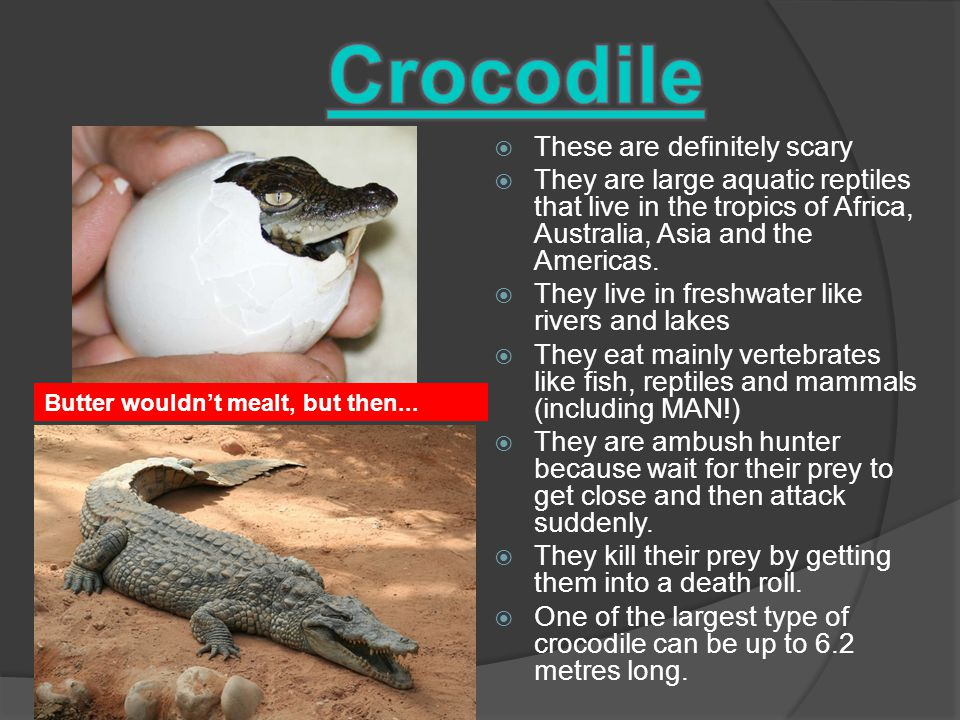  These are definitely scary  They are large aquatic reptiles that live in the tropics of Africa, Australia, Asia and the Americas.