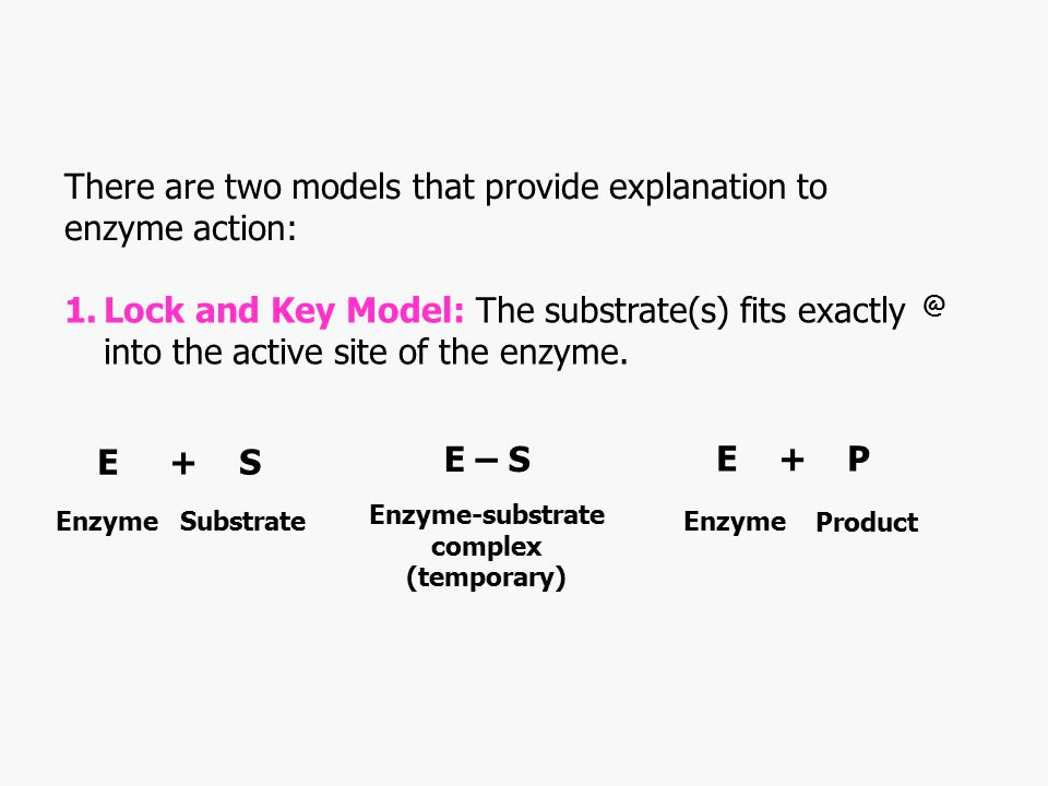 There are two models that provide explanation to enzyme action: 1.Lock and Key Model: The substrate(s) fits exactly into the active site of the enzyme