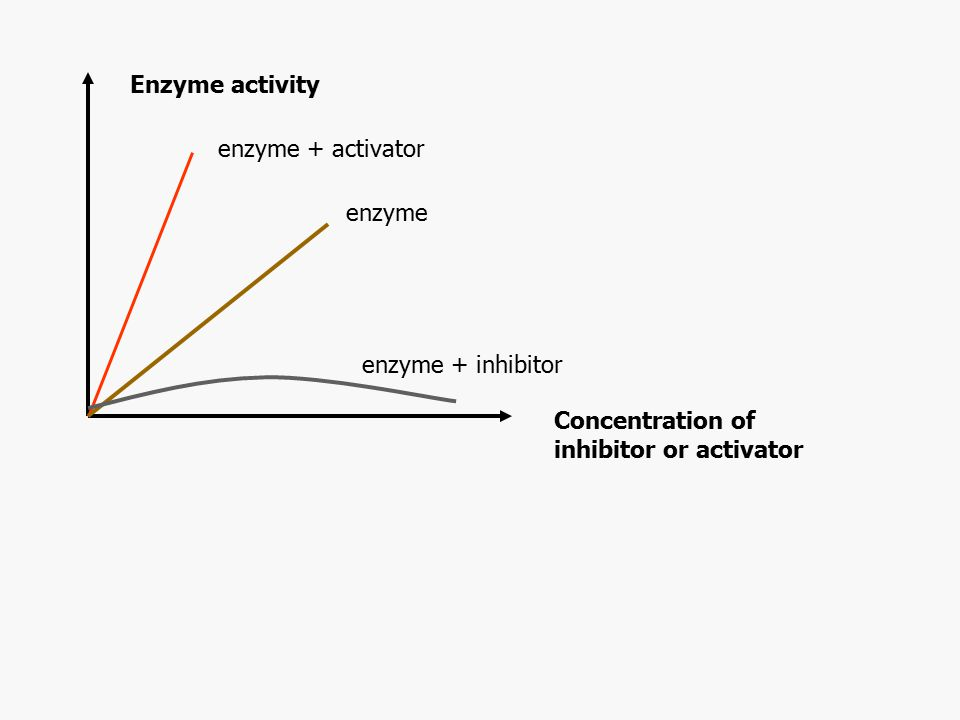 Enzyme activity Concentration of inhibitor or activator enzyme + activator enzyme enzyme + inhibitor