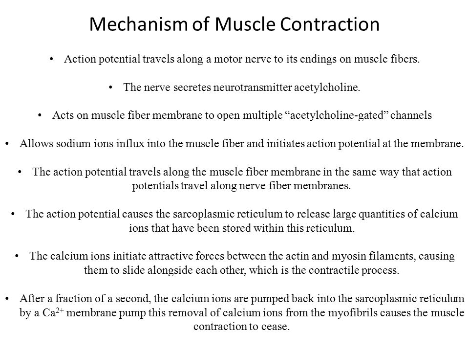 Fast Fibres vs Slow Fibres The muscles that react rapidly are composed mainly of fast fibers.