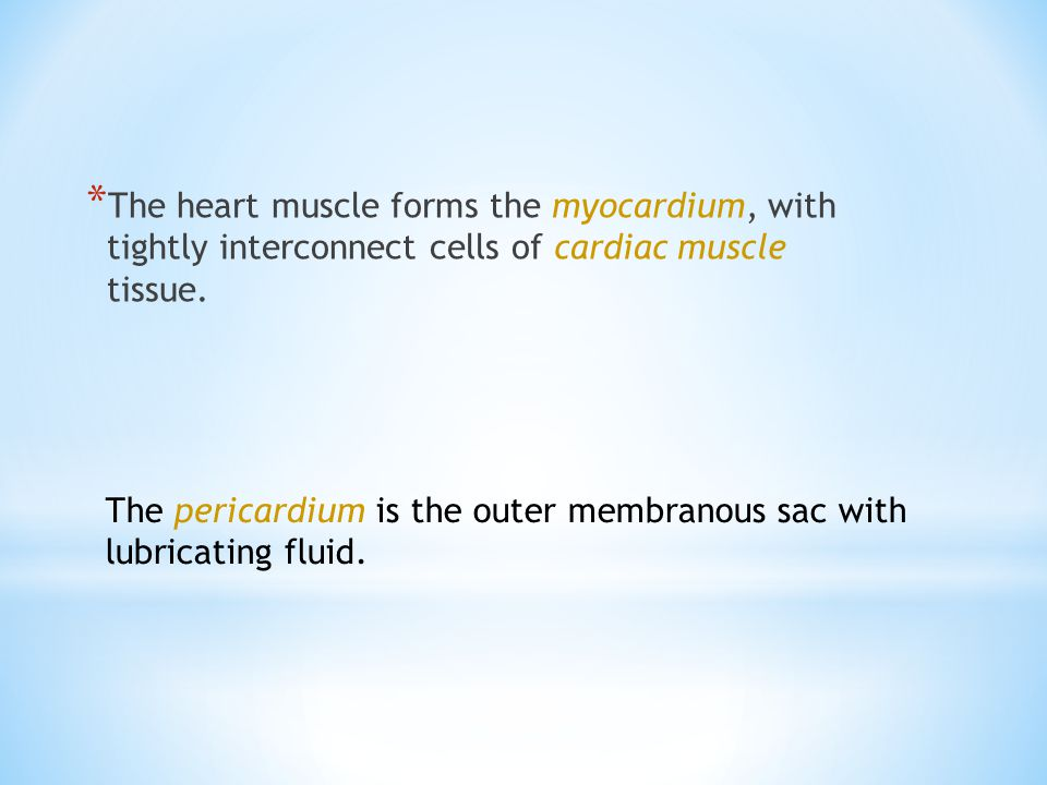 * The heart muscle forms the myocardium, with tightly interconnect cells of cardiac muscle tissue.