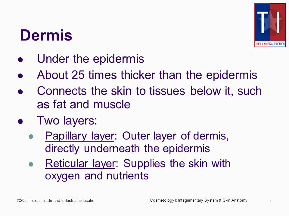 ©2005 Texas Trade and Industrial Education Cosmetology I: Integumentary System & Skin Anatomy 7 Sub-layers of Epidermis Stratum corneum: also called the horny layer.