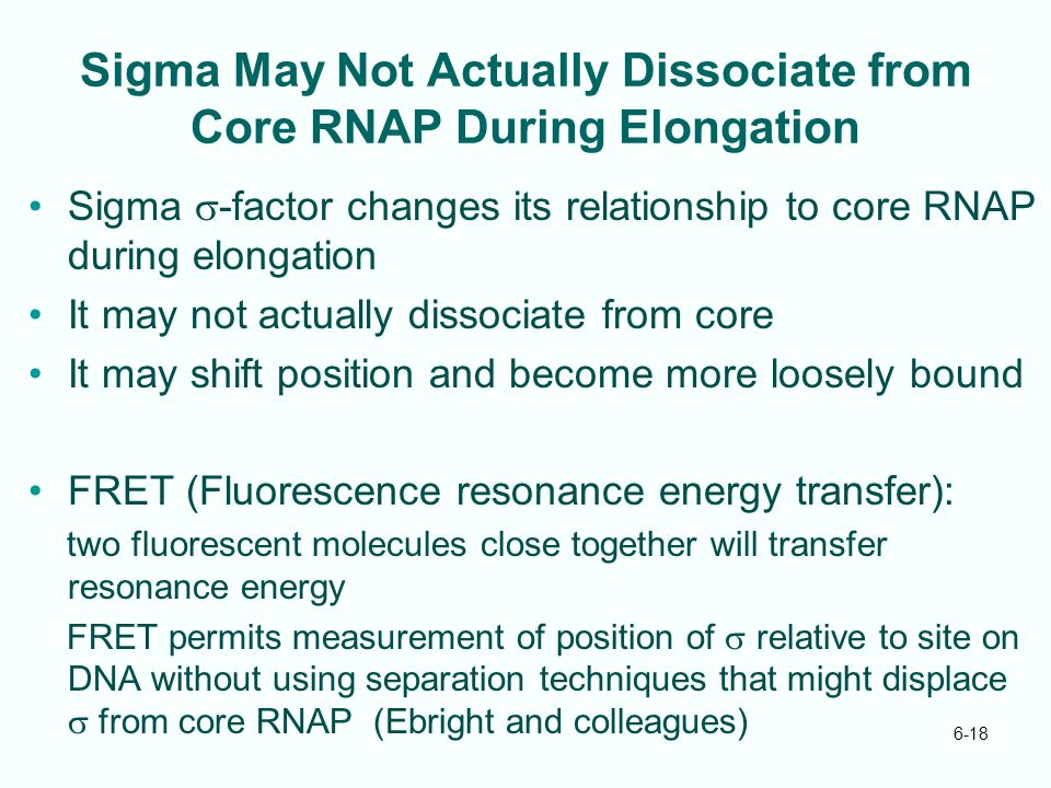 6-18 Sigma May Not Actually Dissociate from Core RNAP During Elongation Sigma  -factor changes its relationship to core RNAP during elongation It may