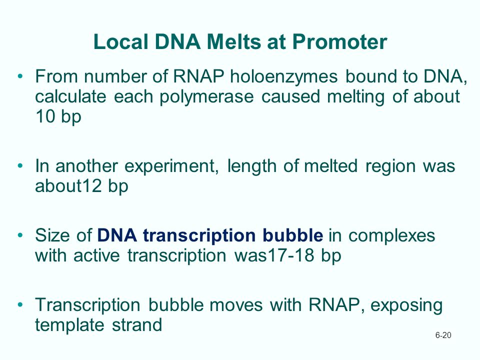 6-20 Local DNA Melts at Promoter From number of RNAP holoenzymes bound to DNA, calculate each polymerase caused melting of about 10 bp In another expe