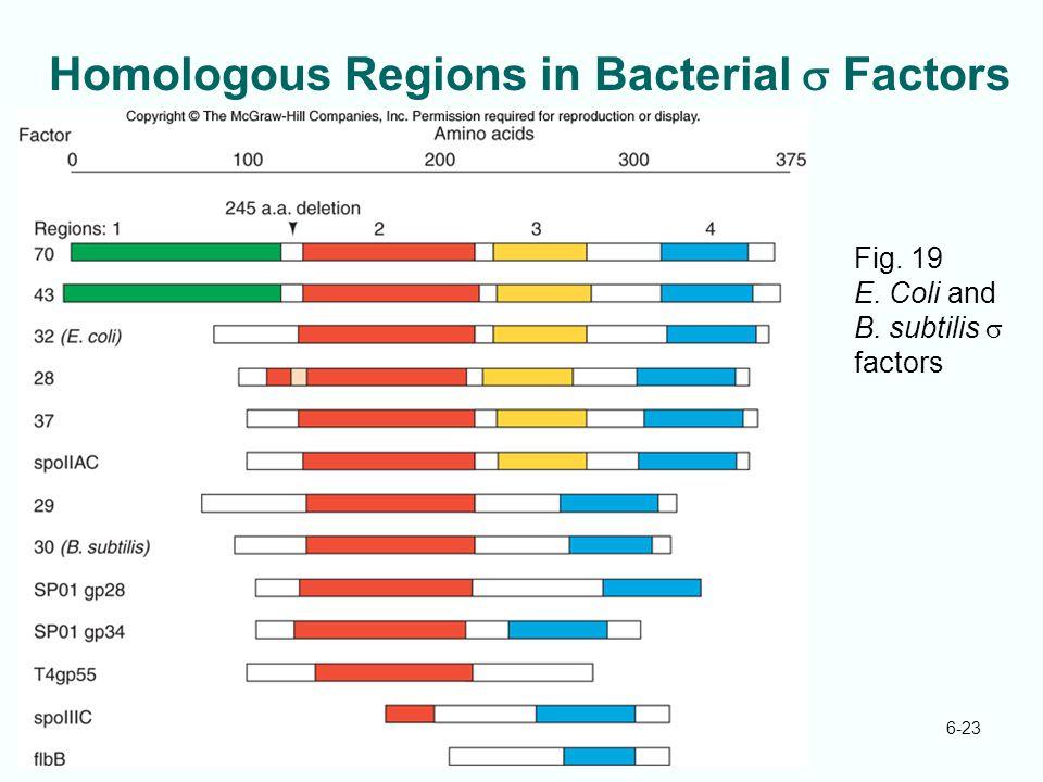 6-23 Homologous Regions in Bacterial  Factors Fig. 19 E. Coli and B. subtilis  factors