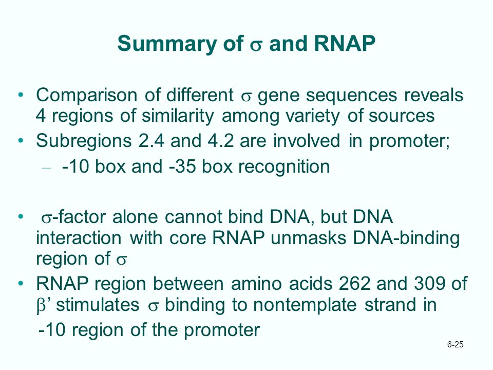 6-25 Summary of  and RNAP Comparison of different  gene sequences reveals 4 regions of similarity among variety of sources Subregions 2.4 and 4.2 ar