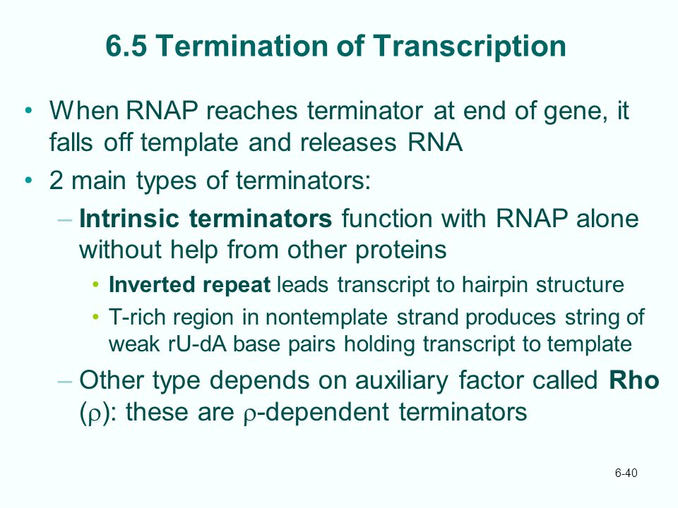 6-40 6.5 Termination of Transcription When RNAP reaches terminator at end of gene, it falls off template and releases RNA 2 main types of terminators: