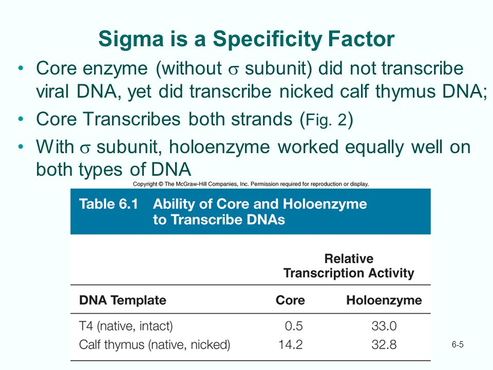 6-5 Sigma is a Specificity Factor Core enzyme (without  subunit) did not transcribe viral DNA, yet did transcribe nicked calf thymus DNA; Core Transc