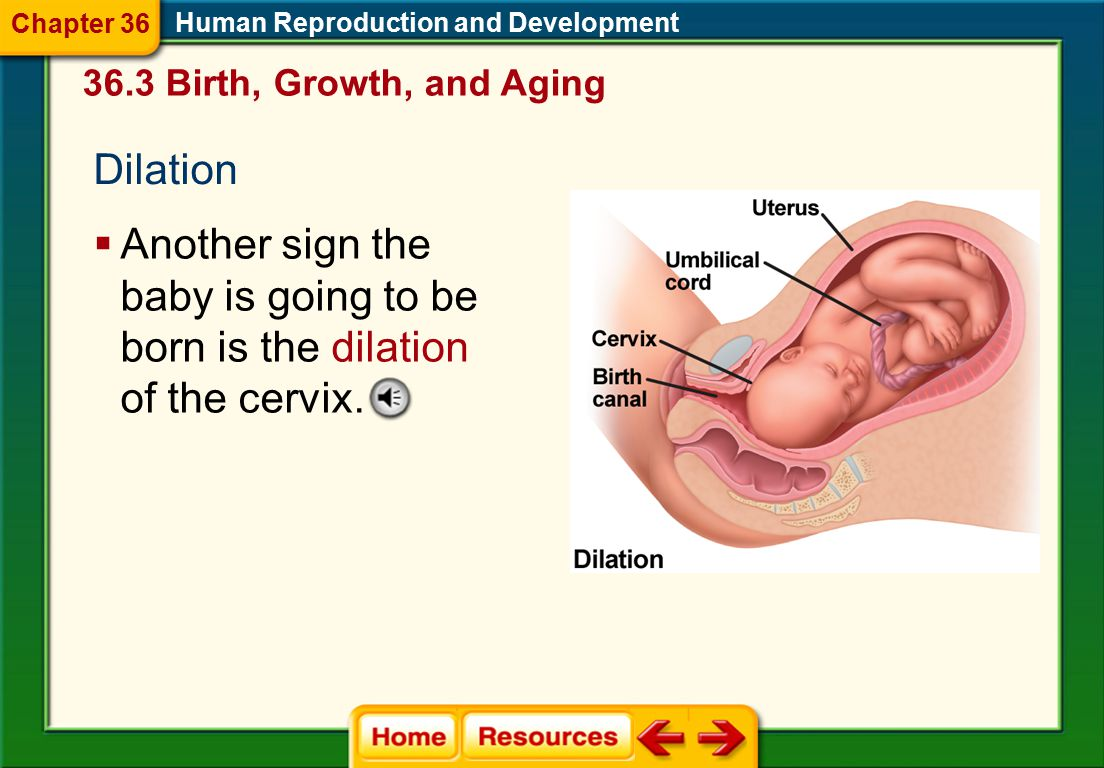 Human Reproduction and Development 36.3 Birth, Growth, and Aging Birth  Birth occurs in three stages: dilation, expulsion, and the placental stage. 