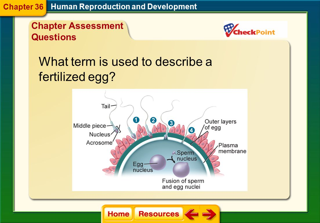 Human Reproduction and Development True or False Testosterone and progesterone are the female hormones produced in the ovaries. Chapter Assessment Que