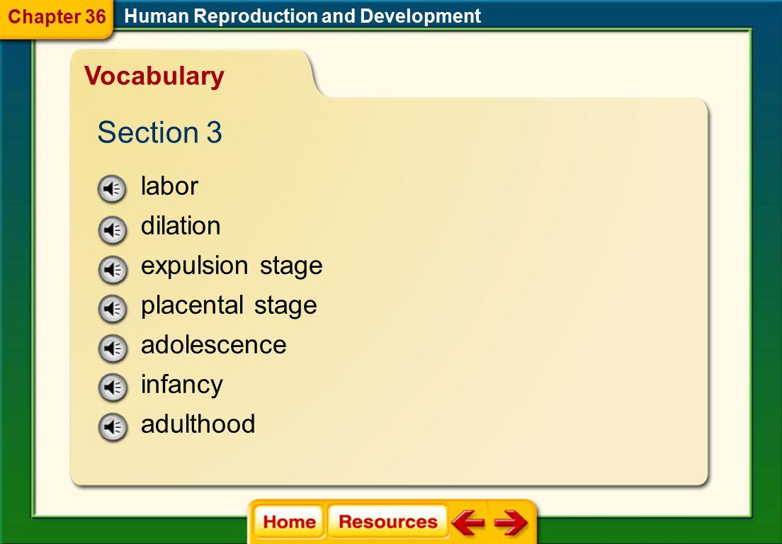 morula blastocyst amniotic fluid Human Reproduction and Development Vocabulary Section 2 Chapter 36