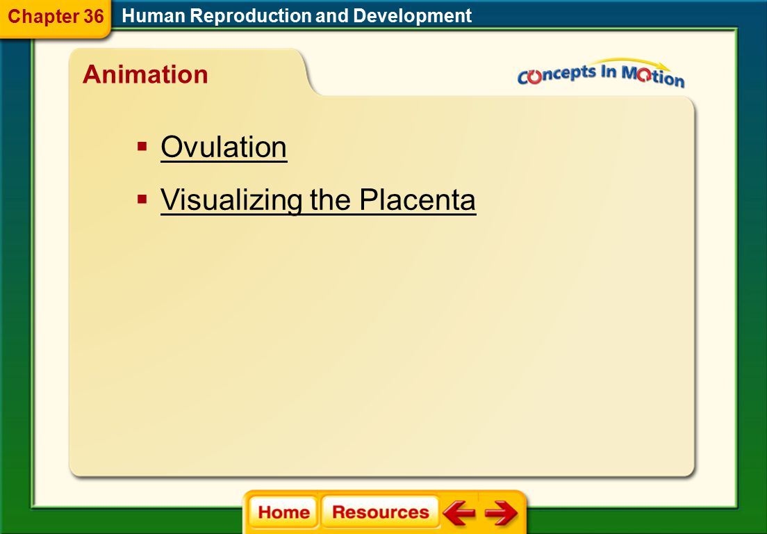 labor dilation expulsion stage placental stage adolescence infancy adulthood Human Reproduction and Development Vocabulary Section 3 Chapter 36