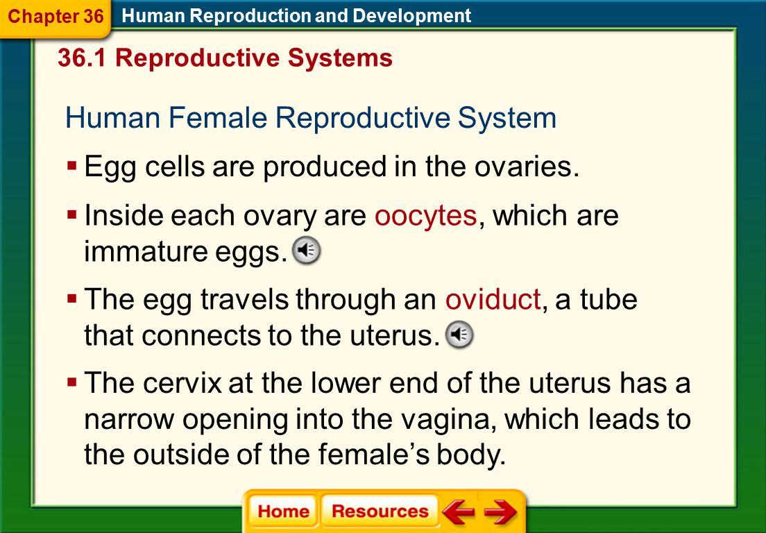 Male Hormones Human Reproduction and Development  Testosterone is a steroid hormone that is necessary for the production of sperm.  Three hormones i