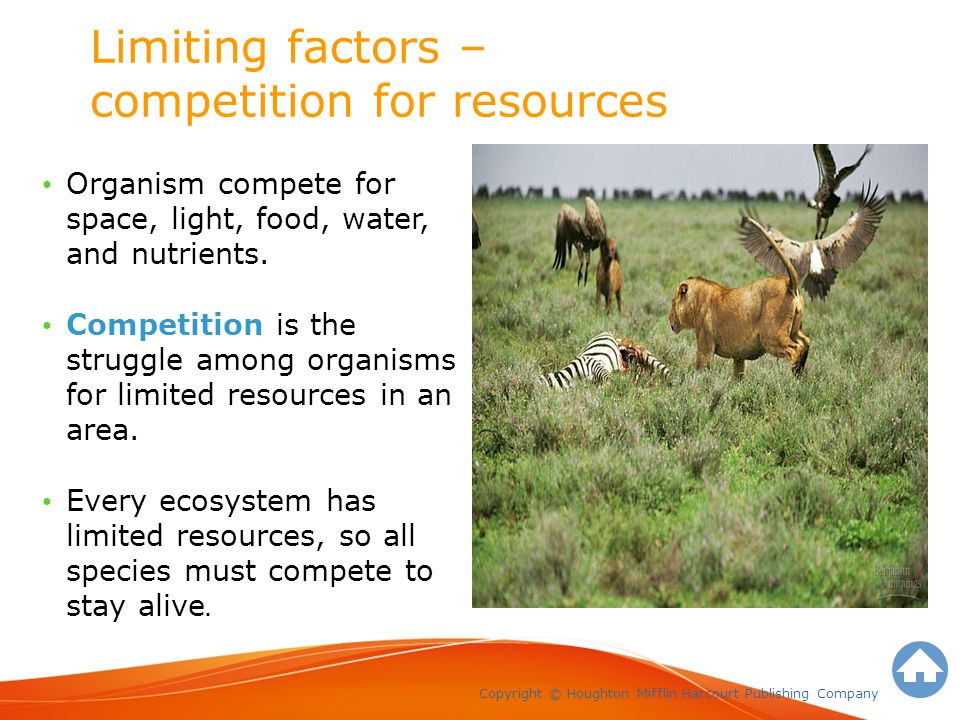 Limiting factors – competition for resources Copyright © Houghton Mifflin Harcourt Publishing Company Organism compete for space, light, food, water, and nutrients.