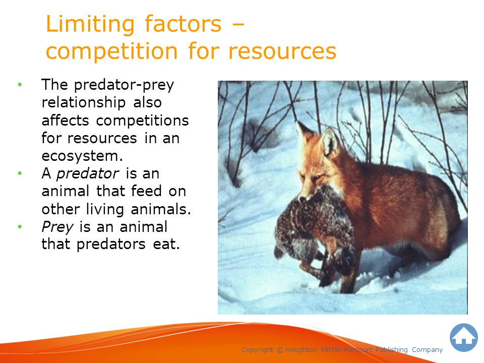 Limiting factors – competition for resources Copyright © Houghton Mifflin Harcourt Publishing Company The predator-prey relationship also affects competitions for resources in an ecosystem.