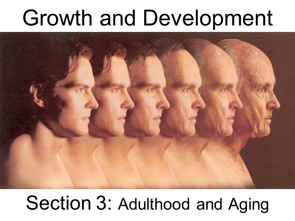 Growth and Development Section 3: Adulthood and Aging