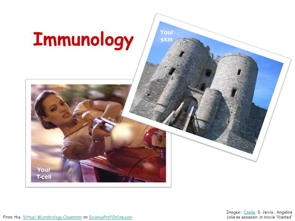Immunology pathogen Your Skin Images: : Castle, S.